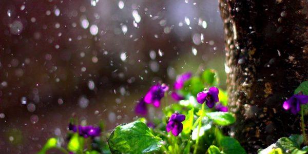 Rain drops flower spring mood bokeh